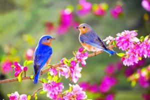 linda spring